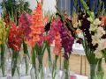 Medzinárodná výstava gladiol, dálii, orchideí abonsajov